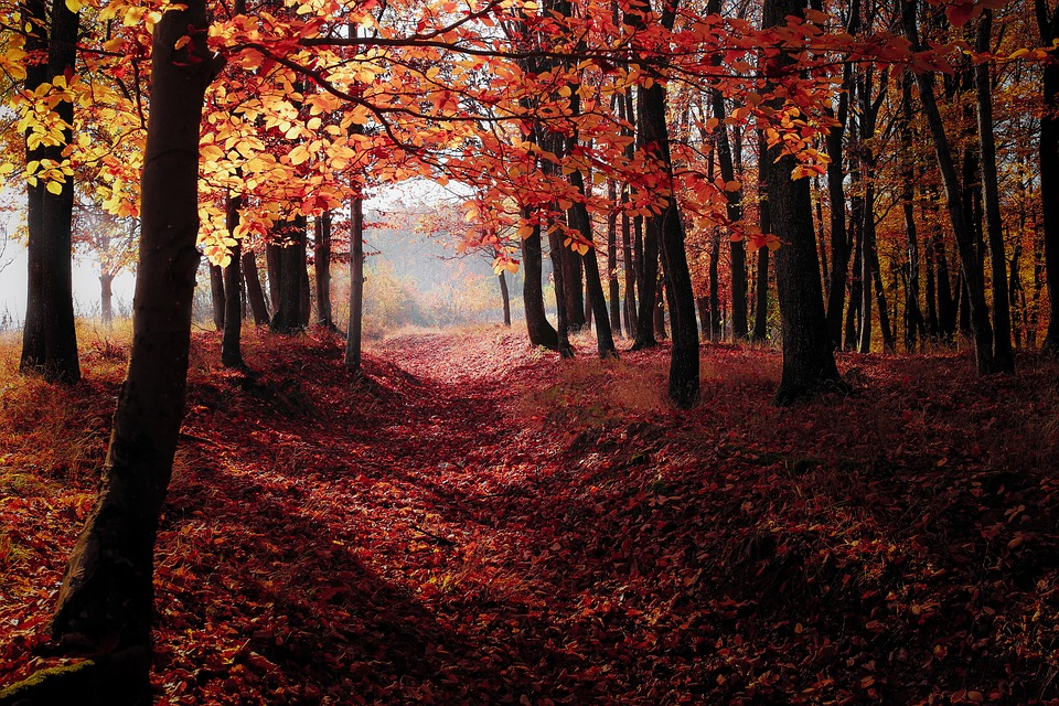 autumnal-forest